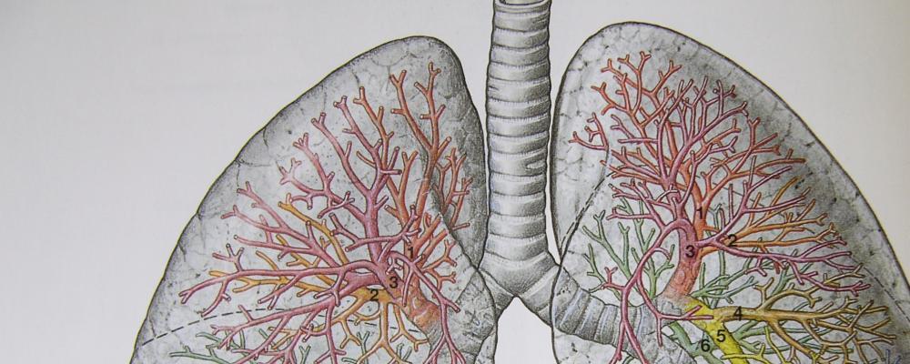Beinvenenthrombosen und Lungenembolien